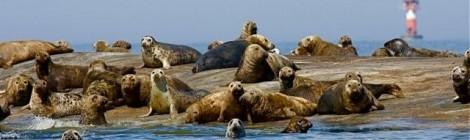 Sandbäckin hylkeet
