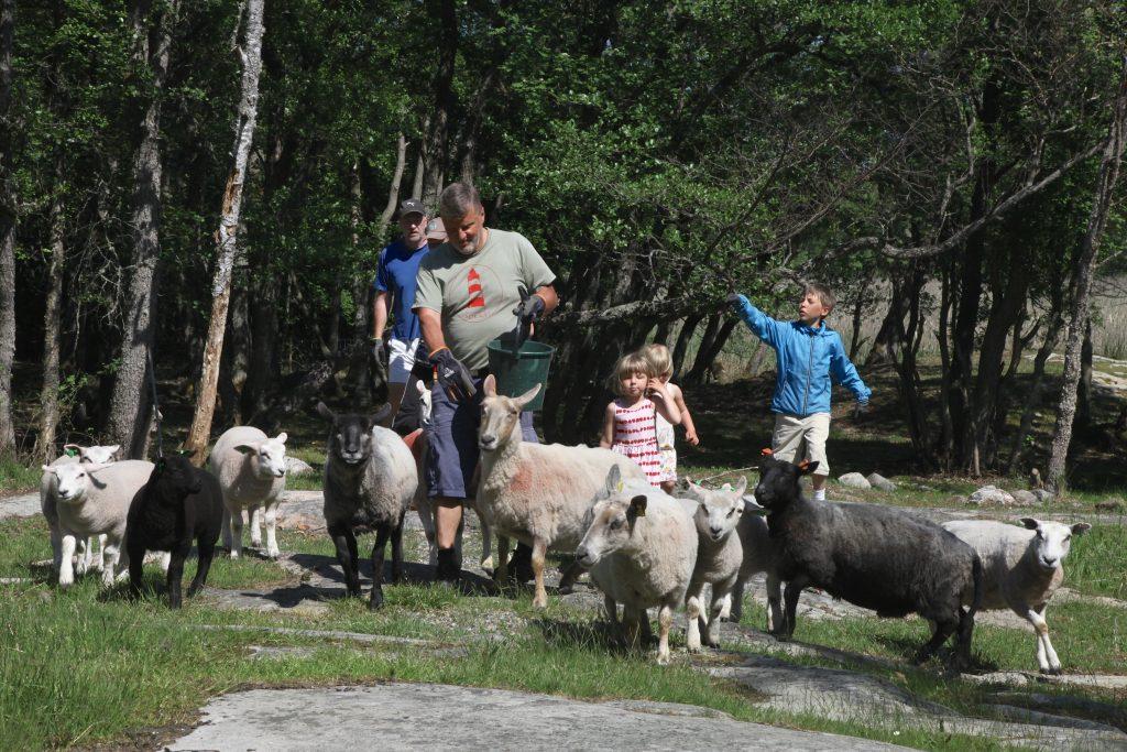 Lampaat ja lammaspaimenet